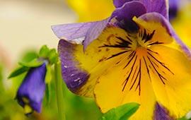 flower_270x170_4